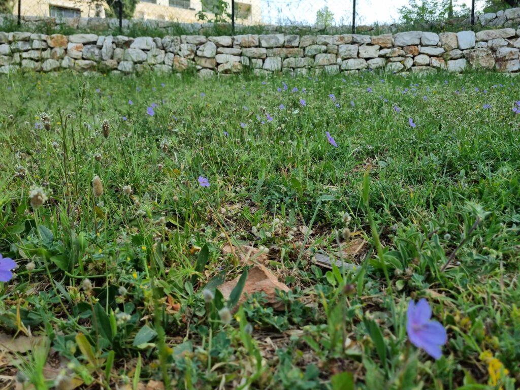 Flowers on April