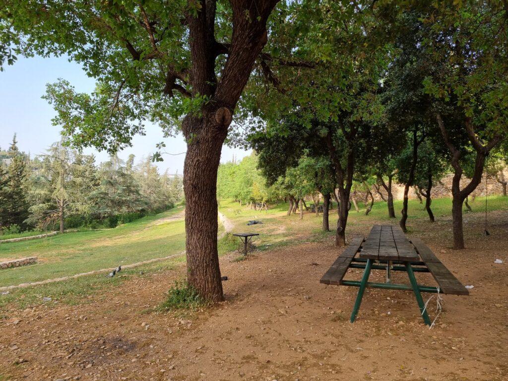 Oak trees Yad Vashem