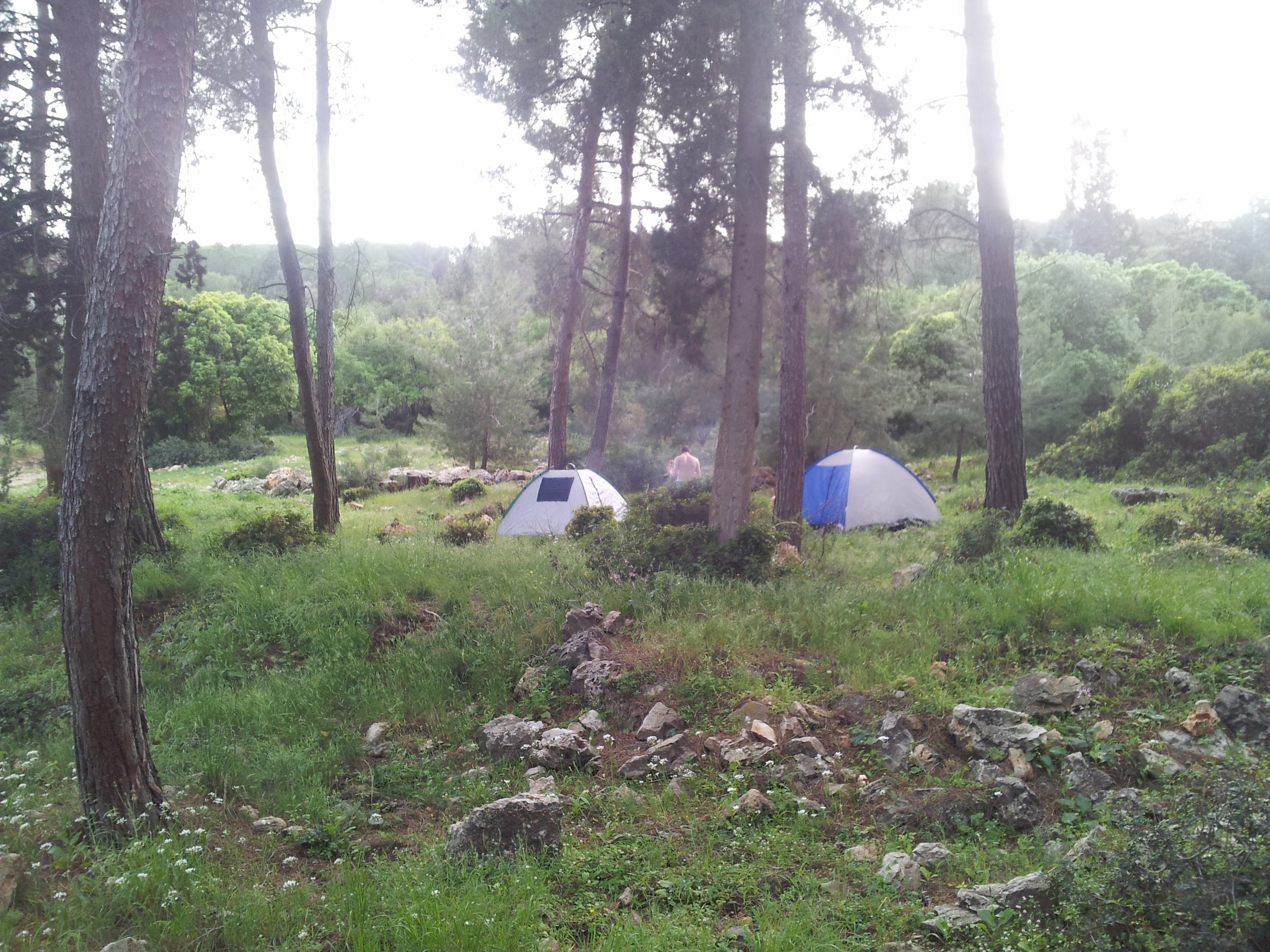 free campingFOREST
