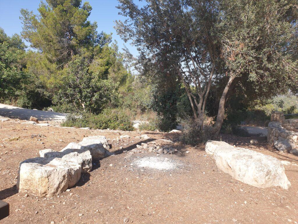 srigim olive tree