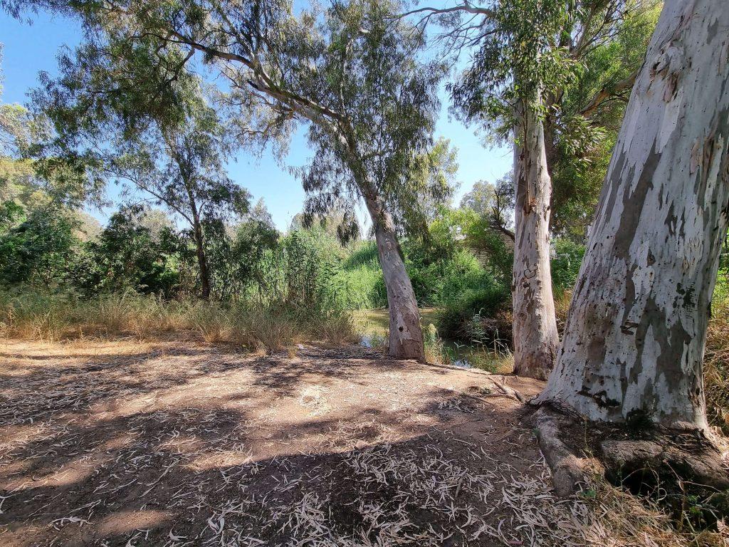 Yarkon Park Camping spot
